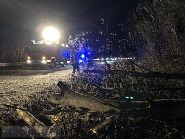 U1.04 - umgestürzter Baum vom 10.03.2019  |  (C) Feuerwehr VG Rodalben (2019)