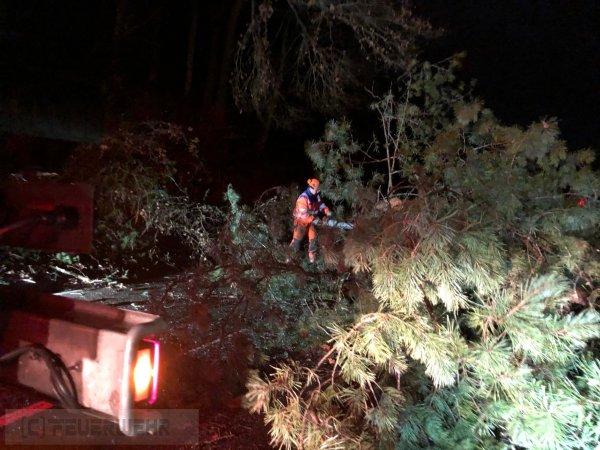 U2.07 - umgestürzter Baum mit Dringlichkeit vom 10.02.2020  |  (C) Feuerwehr VG Rodalben (2020)